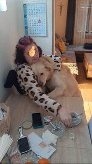 2j 40 kg Labrador Retriever