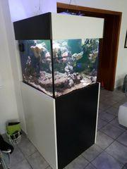 meerwasseraquarium 70x70x60 cube