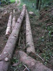 Käferholz Fichte zum Selbstschneiden