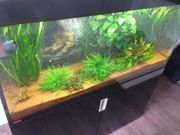 EHEIM Incpiria 400 - Top Aquariumkombination