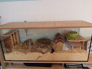 Wüstenrennmäuse mit Terrarium und viel