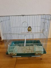 gloster consert mit einem Käfig