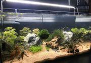 Aquarium mit toller Einrichtung