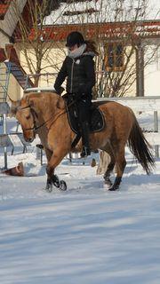 Biete Reitbeteiligung auf 12-jährigen Pony
