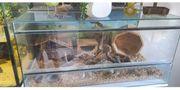 Schönes Meerschweinchen Terrarium günstig abzugeben