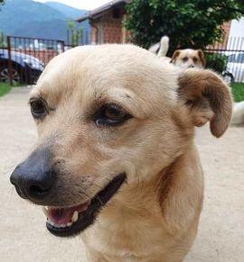 Hunde - Ein ganz besonderer Bub Vincent