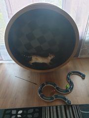 katzenlaufrad Katzenrad bengal kitten