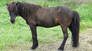 Biete Reitbeteiligung an Spasspferd in