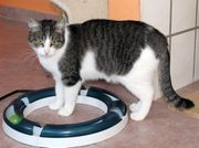 liebe Katze Trischa sucht Zuhause -