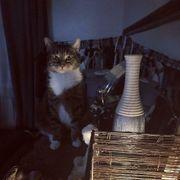 Katze abzugeben