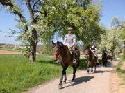Pferdepension mit Halle Führanlage und
