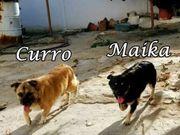 Curro und Maika warten auf