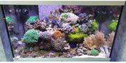 Meerwasseraquarium Eheim Incpiria 300 LED