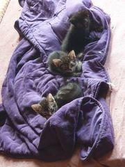 Hauskatzen und Angora 14 und