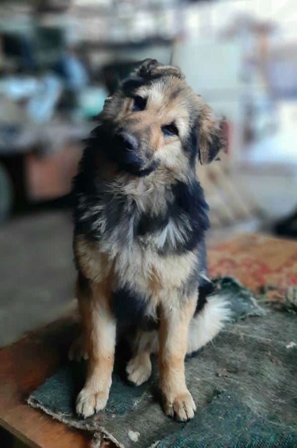 Nancy Geb April 19 Schaferhund Mix Sucht Treuen Begleiter In Frankfurt Hunde Kaufen Und Verkaufen Uber Private Kleinanzeigen
