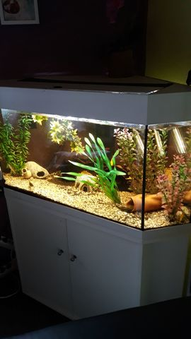 Fische, Aquaristik - Eck Aquarium 190 Liter LED