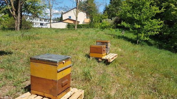 Bienen Ableger Jungvölker