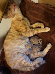 knuddelige Katzenbabies