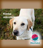 Kimba - treuer Hundebursche mit Straßenerfahrung