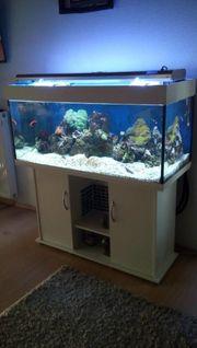 Meerwasser aquarium 300 l mit