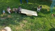 Welpenspielzeug Wackelbrett für Welpen Hunde