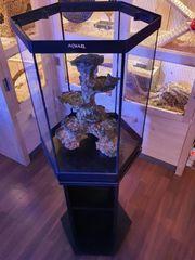 Aquarium 6eck 60liter