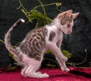 Ines ein verspieltes Katzenkind