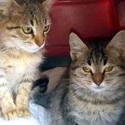 Die Geschwister Tina und Thommy