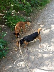 Terrier und Pinscher Mix suchen