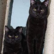 Katzenbuben Monty und Mickey warten