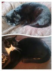 2 kastrierte u stubenreine Katzen