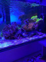 Aquarium Aqua Medic Xenia 100