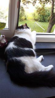 Katzenpension Katzenbetreuung