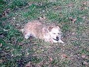 Biete Hundebetreuung dauerhaft od Urlaubsbetreuung