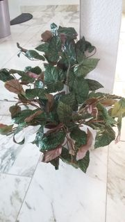 21 Deko- Pflanzen