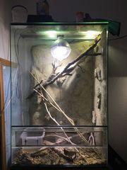 Terrarium Hochterrarium 75x45x110