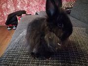 Kaninchen Baby zu Abgabe Mädchen