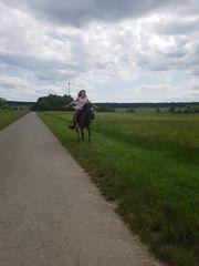 Suche Pferd zur Verfügung