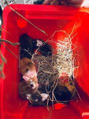 Baby Hasen Kanninchen