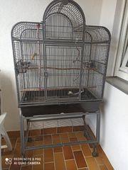 Vögel Käfig