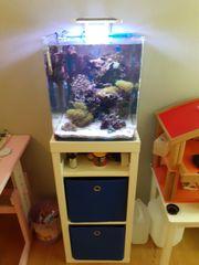 Meerwasser Aquarium Dennerle 60l komplett