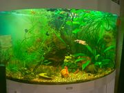 Aquarium 190 Liter