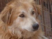 Zouva - der freundliche Junghund mit