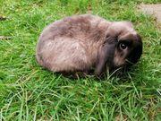 verschiedene kastrierte Kaninchen suchen