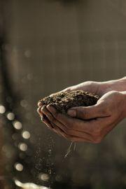 Großmengen an Humus Mutterboden