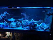 Aquarienauflösung Meerwasser