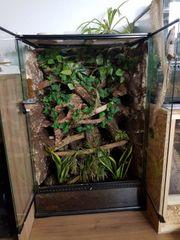 Biete Bioaktives Terrarium mit Inhalt
