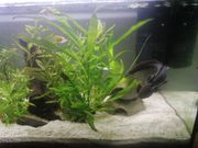 Axolotl wildling Mit 116 Liter