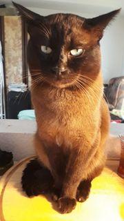 CoCo hat Zeit für Katzenladys