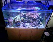 mp eheim Aquarium leer 430l